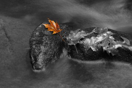 One leaf on rock - colorBW mix.  Smoky Mountains National Park, USA. photo