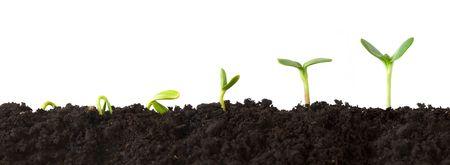 Sequentie van een Plant Growing in Dirt Stockfoto