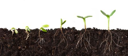 sequence: Cutaway Sequence of Plants Growing in Dirt - Roots Showing Stock Photo