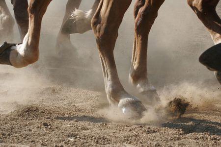 Hoof Dust Stock Photo