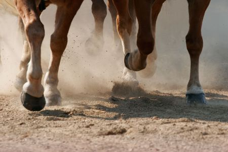 galloping: Hoof Dust - The hooves of running horses.  Shallow focus - focus is on the farther legs.
