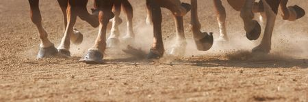 pano: The hooves of horses running through dirt.