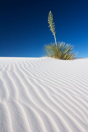 Yucca and Rippled Sand Dune - White Sands National Park, USA Stock Photo - 2702548