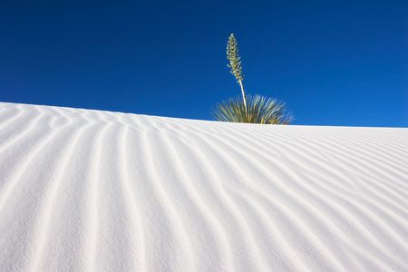 Yucca and Sand Dune - White Sands National Park, USA photo