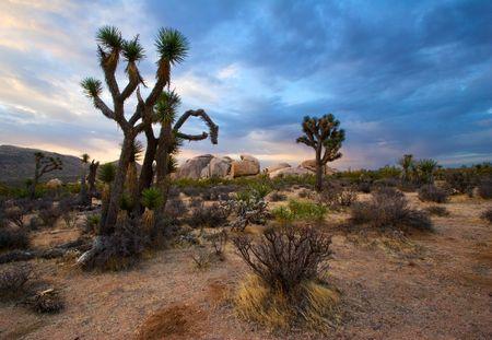 Johshua Tree National Park, California, at Sunrise Stock Photo - 3146973