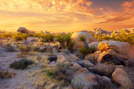 joshua tree national park: Sunset at Joshua Tree National Park