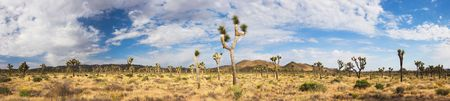 arid: Panorama of Joshua Tree National Park (Mojave Desert) - California