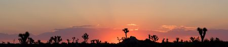 Sunrise in the Mojave Desert of Joshua Tree National Park, California (Panorama) Stock Photo - 3335999
