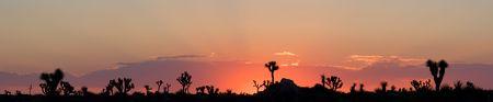 Sunrise in the Mojave Desert of Joshua Tree National Park, California (Panorama) Stock Photo - 3335999