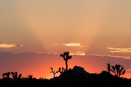 Sunrise in Joshua Tree National Park, California.