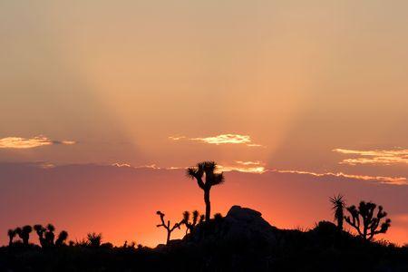 Sunrise in Joshua Tree National Park, California. Stock Photo - 3336000