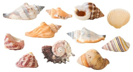 A collection of isolated seashells (22 in total). photo