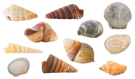 A collection of isolated seashells (part 1 of 2) photo