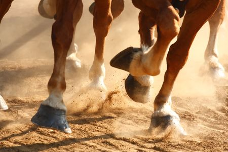 dusty: Close-up view on the hooves of horses running through a dusty field.