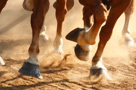 hooves: Vista ravvicinata sugli zoccoli dei cavalli in esecuzione attraverso un campo polveroso.  Archivio Fotografico