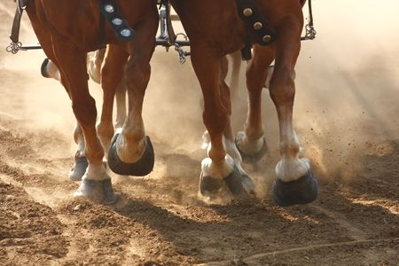 Close-up on the hooves of draft horses pulling a wagon through a dusty field. Stock Photo