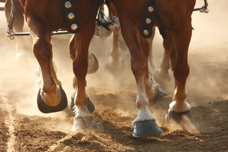The hooves of draft horses galloping through a dusty field. Stock Photo