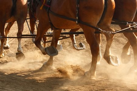 hitched: Draft horses hitched together running through a dusty field. Stock Photo
