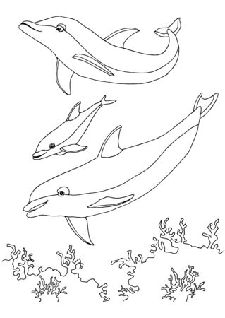 coloring book sea life. dolphins family. Underwater world. outline vector Black and white illustration for colouring book page.