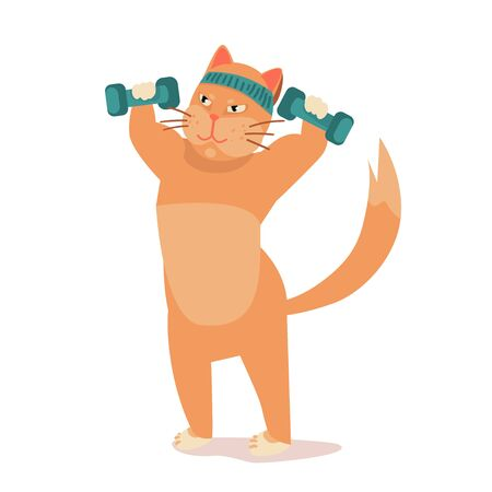 athletic cat trains in sport. fit cat in gym pumps muscles, lifts dumbbells. Exercising in fitness, losing weight. illustration before , after vector.