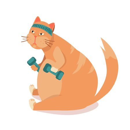 FAT cat TRAINS in sport. heavy cat in gym lifts dumbbells. Exercising in fitness, losing weight. illustration before , after vector.
