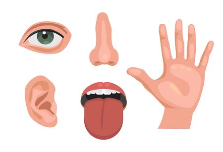 5 sensory organs. feelings sense- eyes vision, nose smell, tongue taste buds, touch, hearing ears . isolated vector illustration set Stock Illustratie