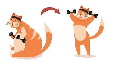 before after Weight loss in sport gym. fitness cat trainer. strong motivation. isolated vector illustration Иллюстрация