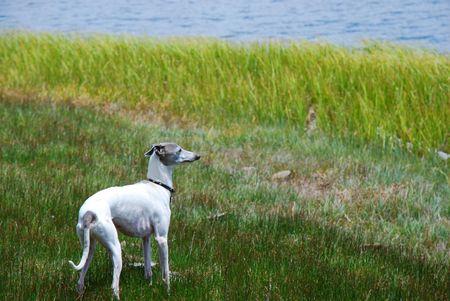 Field and Stream Dog photo
