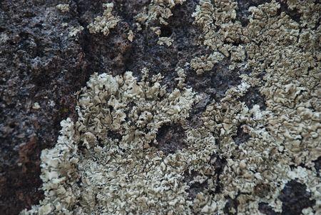 mottle: Lichen Texture 2