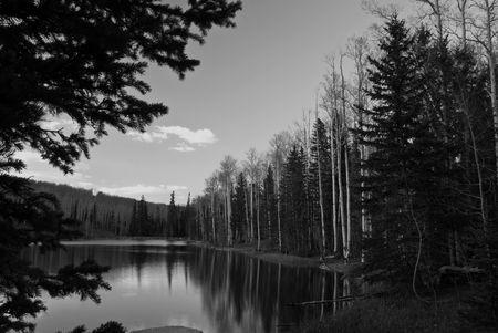 ponderosa pine: Pine Lake Vacation BW