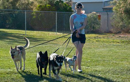 dog on leash: Walker perro