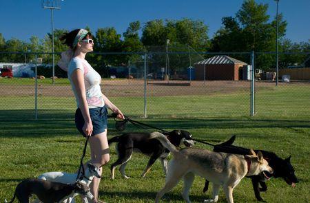 Fashionable multiple dog walker