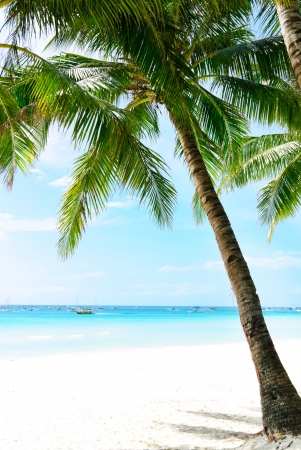 Idyllic Island Coconut Coast Stock Photo - 14083006