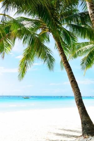 Idyllic Island Coconut Coast