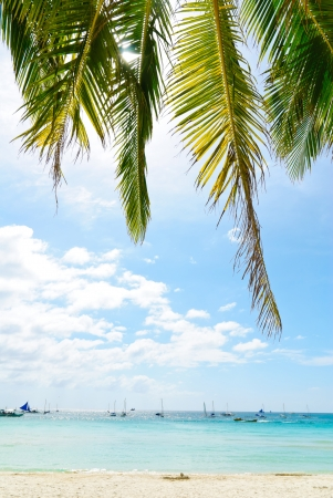 Palm trees by the sea Stock Photo - 14082993