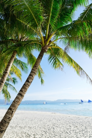 Idyllic Island Coconut Coast Stock Photo - 14083015