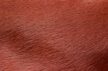Dog fur. Animal fur texture. Fur fees. Short fur Stock Photo