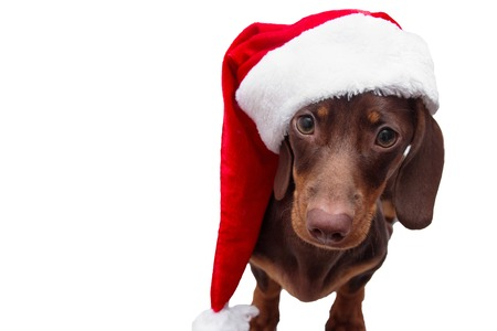 dog and cat and kitens wearing a santa hat Stock Photo