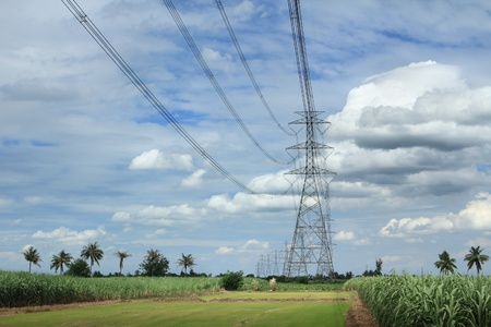 high voltage: High-voltage towers in cane field.