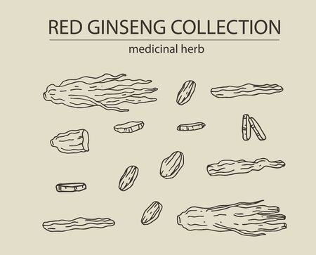Red or panax ginseng dried root and slices for package design and other decoration. Hand drawn vector illustration set. Alternative chinese medicine, korean cosmetic, medicinal herb, food supplement.