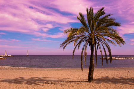 Palm tree. Beautiful sunset view. Mediterranean sea and yacht. Puerto Banus, Marbella city, Costa del Sol, Andalusia, Spain. Stock Photo