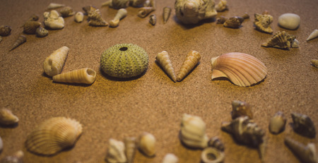 Sees it. The word love of sea shells on a brown background. Imagens