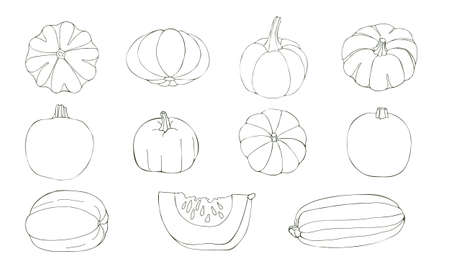 Vector illustration of pumpkins isolated on white background. Different contour vegetables drawn by hands.