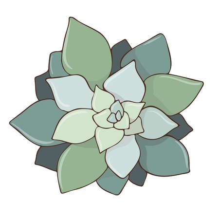 Vector hand drawn doodle illustration of Echeveria elegans. Color bright image of succulent 向量圖像