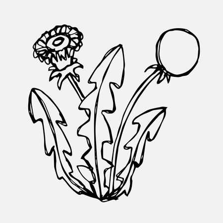 Simple doodle of a dandelion flower bush. Spring season. Vector illustration.
