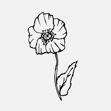 Poppy flower sketch. Simple summer doodle of a plant. Vector freehand line illustration Иллюстрация