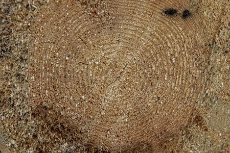 texture and background of a sawn tree trunk closeup