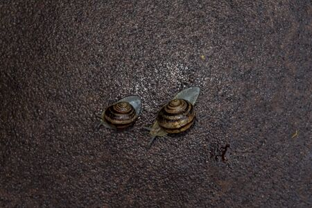 a few snails sitting on the metal surface after rain 版權商用圖片