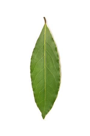 Fresh green bay leaf isolated on white background