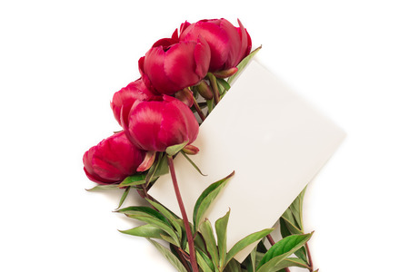 Spring concept. Bouquet of red pions isolated on white background with envelope. Mother's Day or 8th of March festive theme. Close-up.